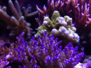 acropower coral growth