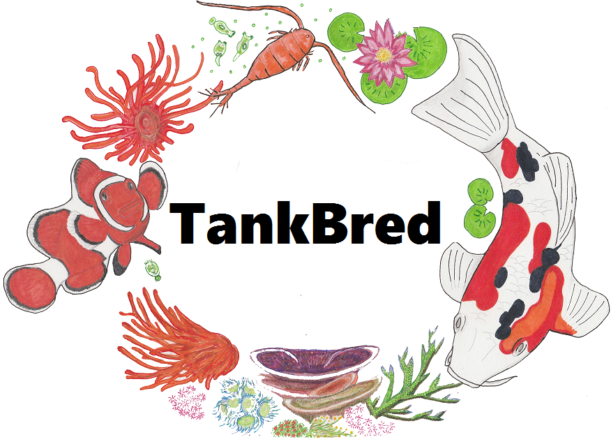TankBred - Online Fishkeeping Shop - Marine Fish Breeding and Coral Cultivation Enthusiasts